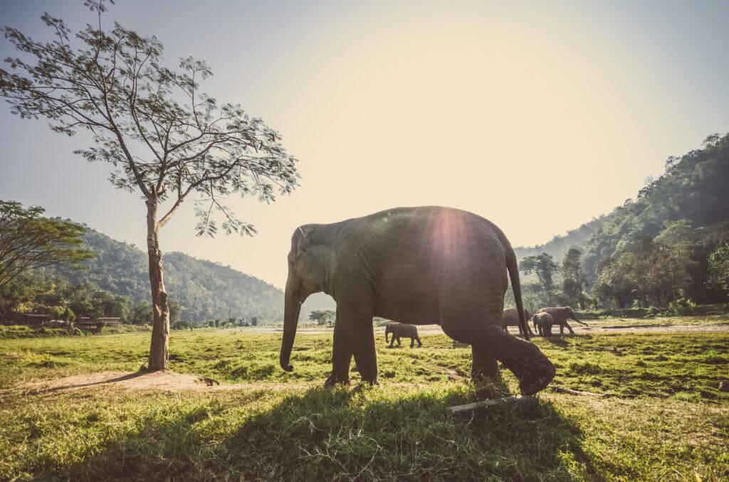 thailandia elefanti