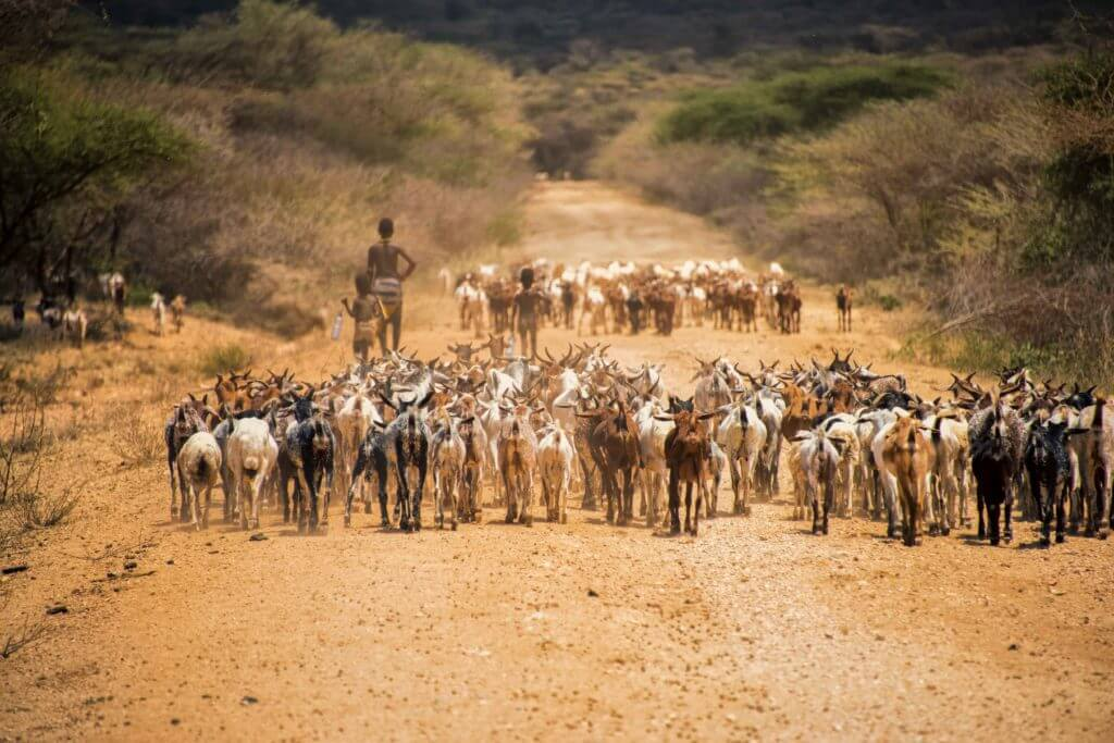 etiopia allevatore