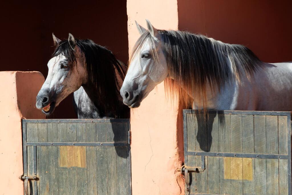 cavalli marocco ranch