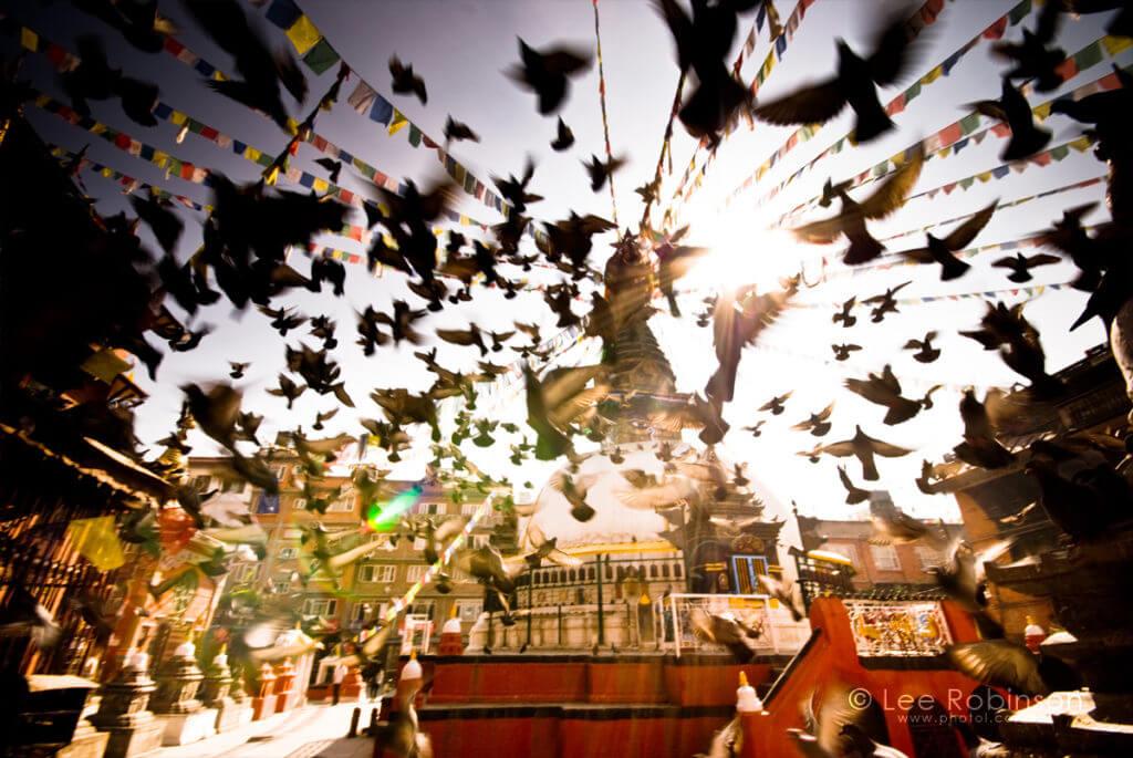 nepal tempio uccelli