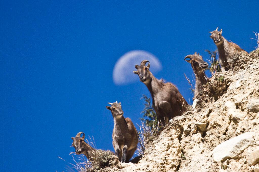 nepal animali luna