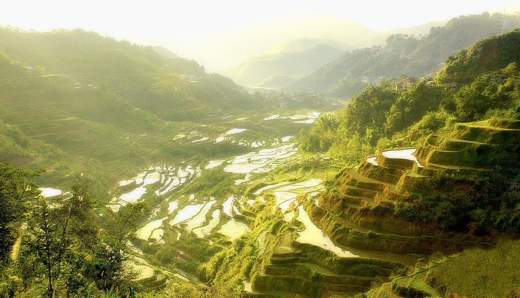 filippine terrazza risaia