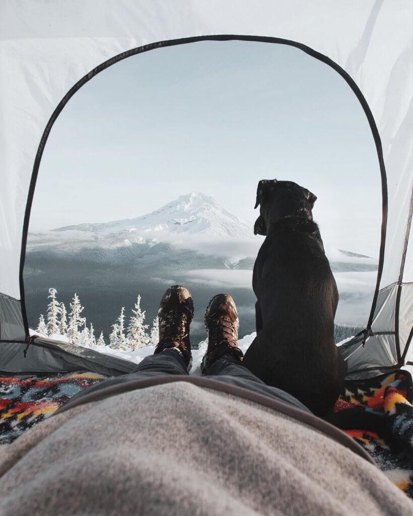 cane tenda viaggio